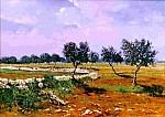 Campo di Ulivi - 50 x 70  olio
