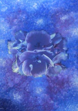 Trsparenze floreali - Opera dell'artista Adria Muzzi