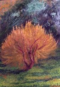 Salice in Toscana - Opera dell'artista Stefano Brocca